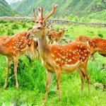 Khóa học SEO Web k4 về sản phẩm nhung hươu Tam Đảo